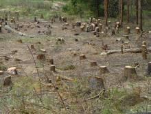 Чернігівщина в ТОП незаконних порубок