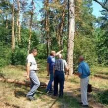 Фхівці дослідилли хворі дерева Чернігова