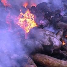 Ямочка, в якій за день згоряє тисяча свиней