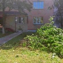Дерево завалив нотаріус?