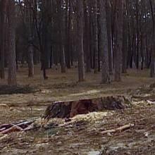 В Ялівщині намітили спиляти 120 дерев