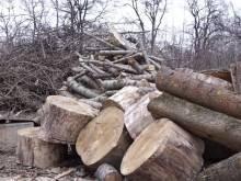 У Чернігові заради будівництва двох магазинів знищать 16 дерев