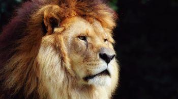 Microsoft уволила около 10% сотрудников Lionhead