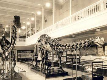 Бронтозавры не вымерли, их не существовало вообще