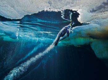������� National Geographic �� 2012 ��
