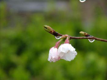 Синоптики обещают настоящую весну