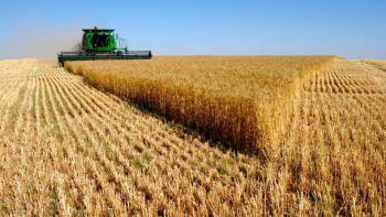 В США посчитали сколько урожая потеряет Украина из-за войны