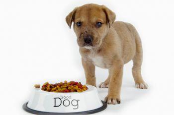Чем лучше всего кормить вашего пса?